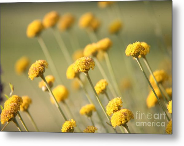 Direction In Yellow..... Metal Print
