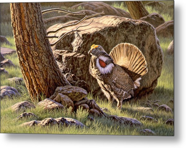 Displaying--blue Grouse Metal Print