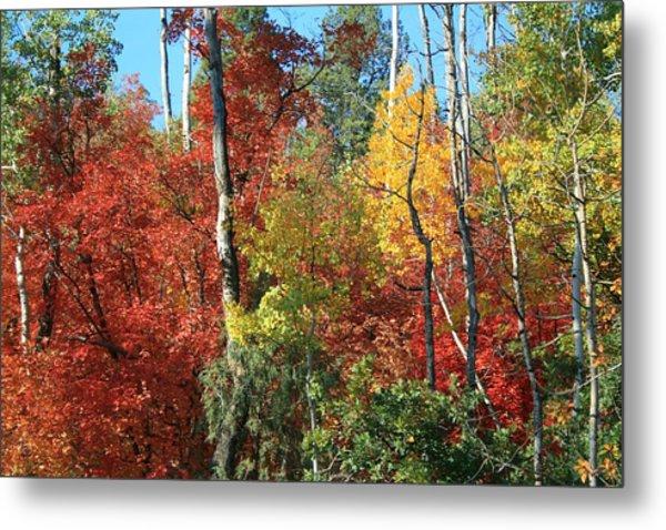 Dixie Autumn Metal Print