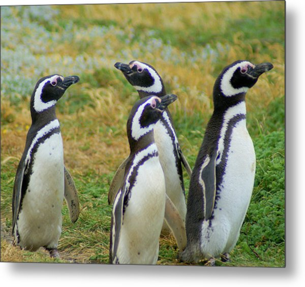 Do You Smell That - Penguins Metal Print by DerekTXFactor Creative