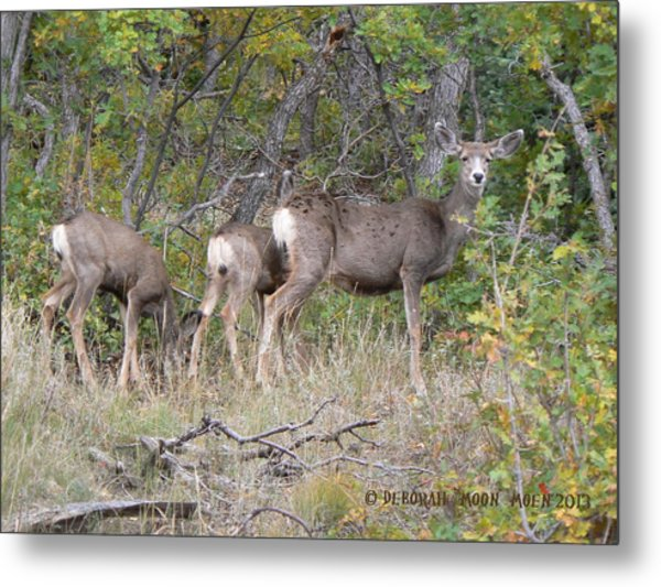Doe And Two Fawns Metal Print