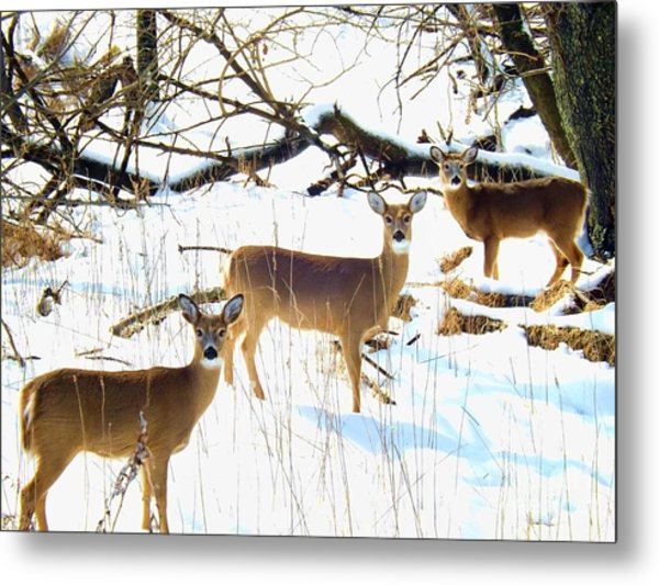 Does In The Snow Metal Print