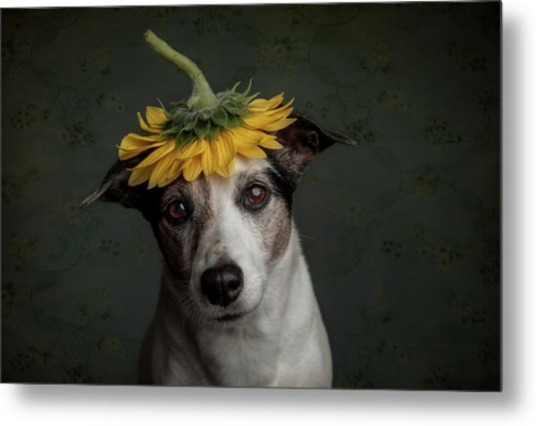 Does She Realize She Looks Like A Sunflower.... Metal Print