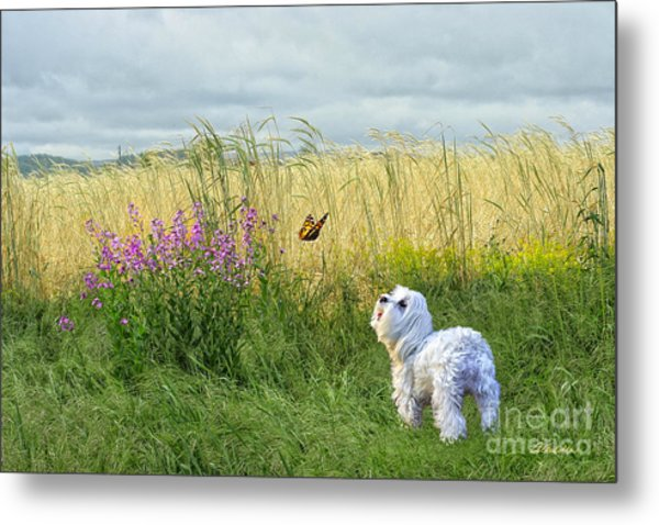 Dog And Butterfly Metal Print