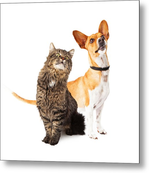 Dog And Cat Looking Up Together Metal Print