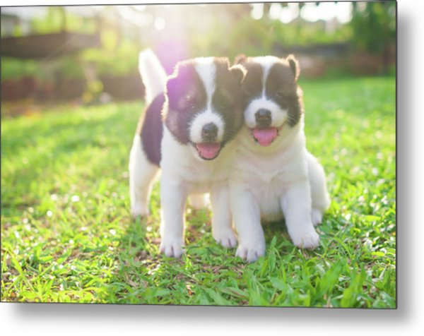 Dog And Puppies Metal Print by Primeimages