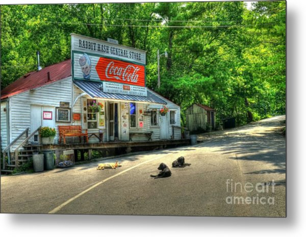 Metal Print featuring the photograph Dog Day Afternoon by Mel Steinhauer