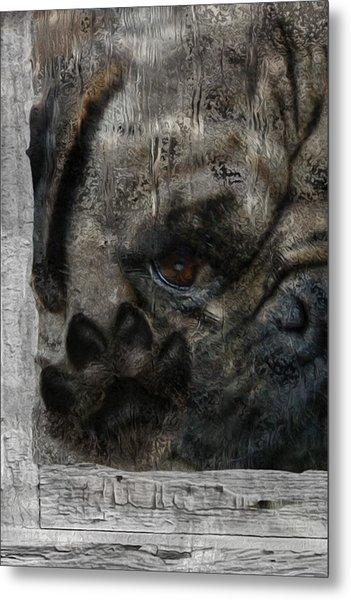 Dog In The Window Metal Print