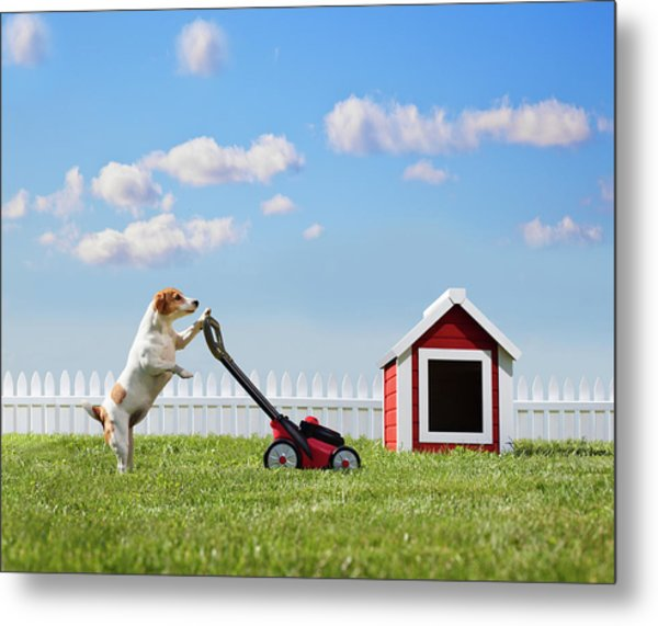 Dog Mowing Lawn Near Dog House Metal Print by Pm Images