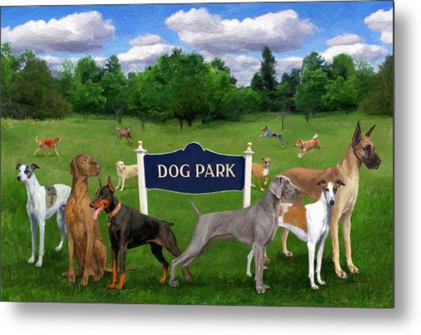 Dog Park Metal Print