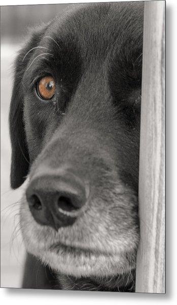 Dog Peek A Boo Metal Print