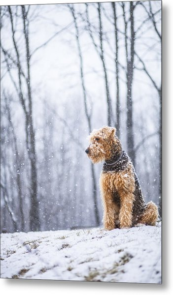 Dog Sits Under The Snowfall Metal Print