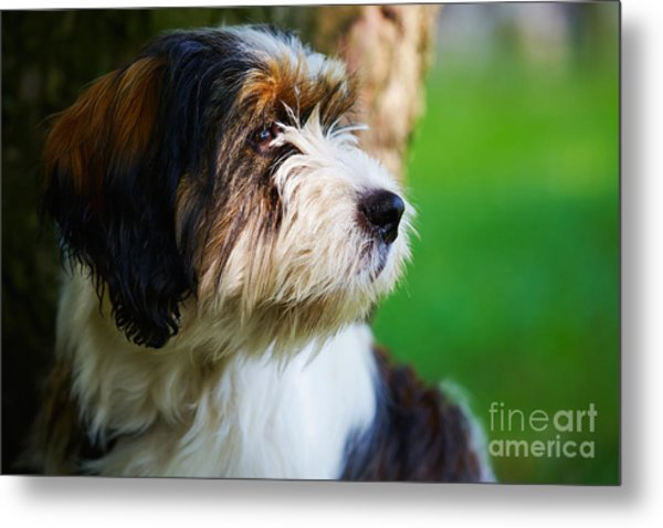 Dog Sitting Next To A Tree Metal Print