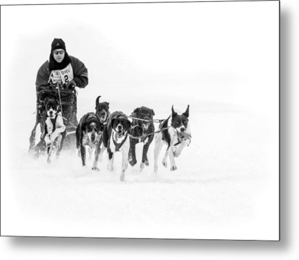 Dog Sled Team Metal Print