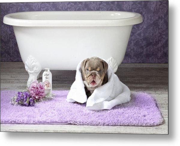 Dog With Towel 2 Metal Print