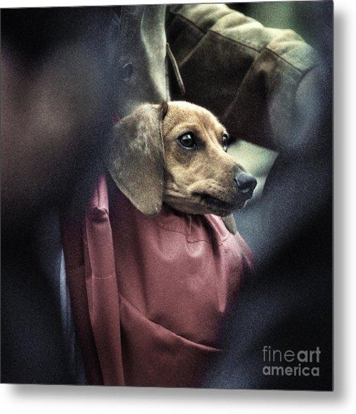 Doggie's Bag Metal Print by Michel Verhoef