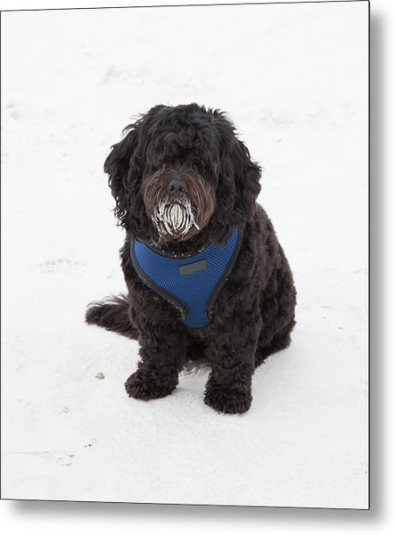 Doggone Good Beach Fun Metal Print