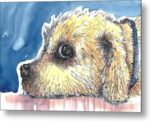 Doggy Being Scolded Metal Print