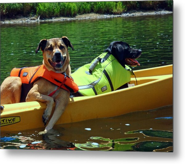 Dogs In A Kayak Metal Print