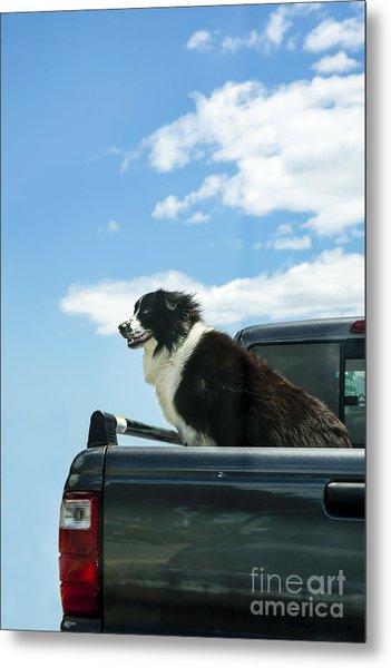 Dogs Love Trucks Metal Print