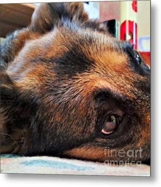 #dogs #pawsforthought #ilovemydog Metal Print
