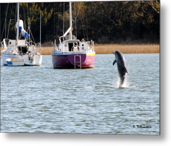Dolphin In Taylors Creek Metal Print