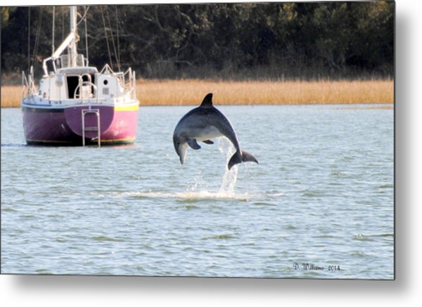 Dolphin Jumping In Taylors Creek Metal Print