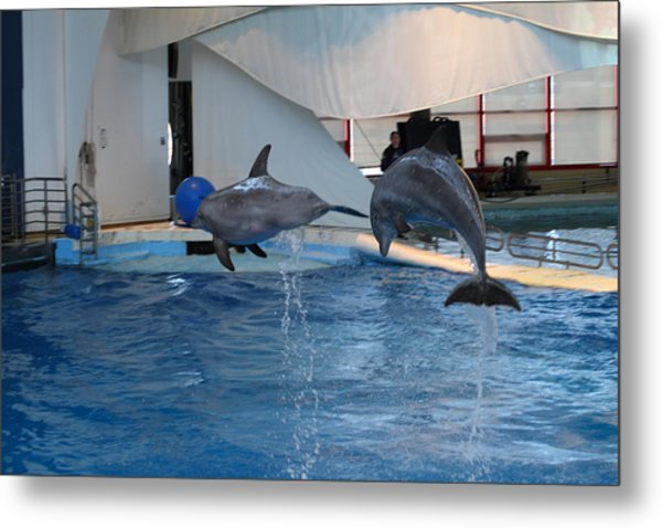 Dolphin Show - National Aquarium In Baltimore Md - 1212258 Metal Print by DC Photographer