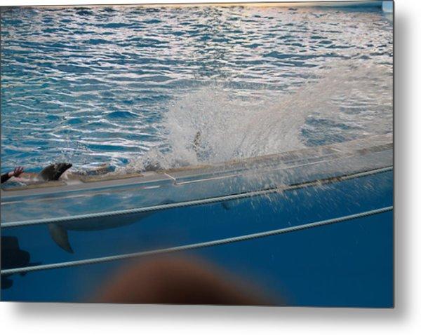 Dolphin Show - National Aquarium In Baltimore Md - 121263 Metal Print