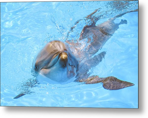 Dolphin Swimming Metal Print