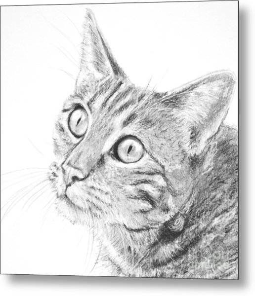 Domestic Cat Portrait Metal Print