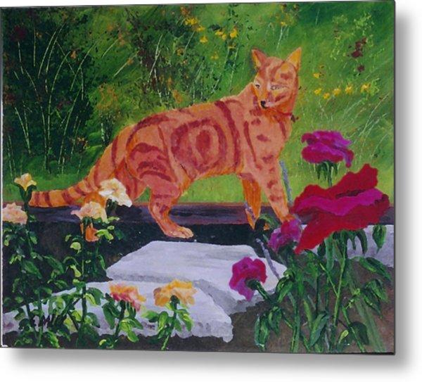 Domestic Tiger Metal Print