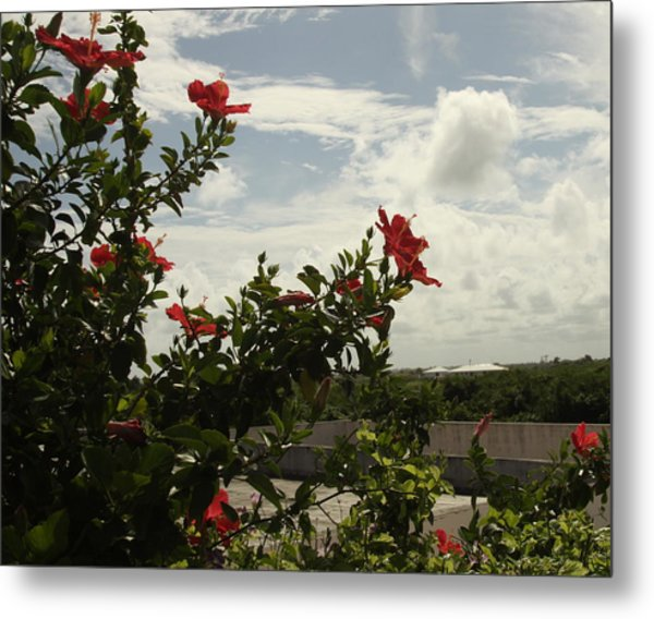 Dominican Red Flower Metal Print