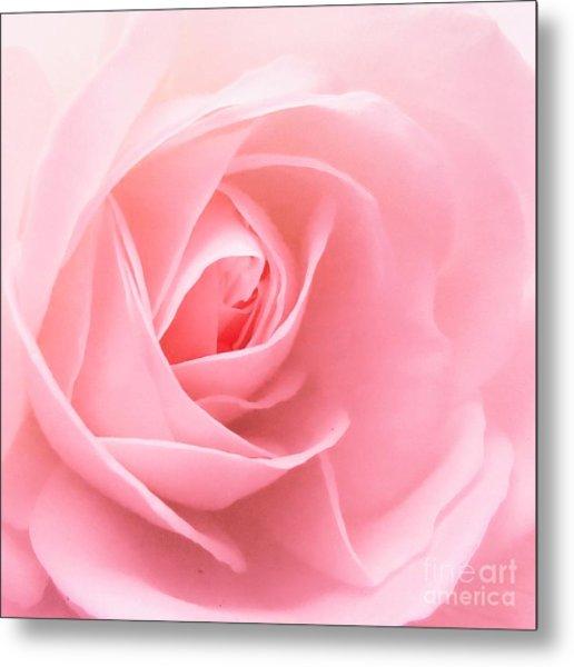 Donation Rose Metal Print