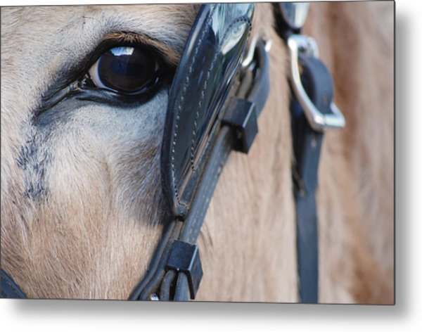 Donkey Eye Metal Print