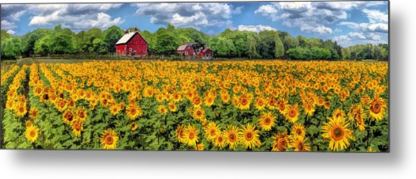 Door County Field Of Sunflowers Panorama Metal Print