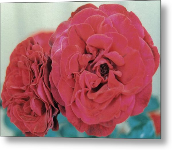 Double Desert  Red Roses Metal Print by Dusty Rose