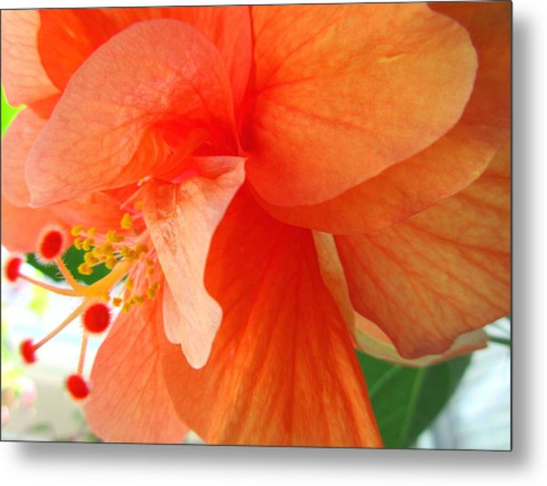 Double Peach Metal Print