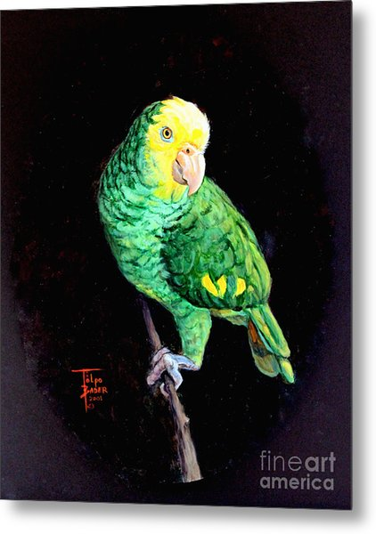 Double Yellow Headed Amazon Paco Metal Print