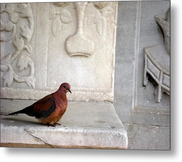 Dove On Historic Art Metal Print
