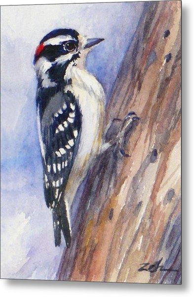 Downey Woodpecker Metal Print