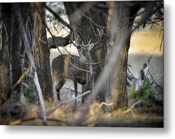 Downwind  Metal Print