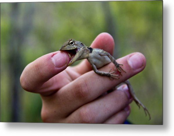 Metal Print featuring the photograph Dragon Biting Back by Debbie Cundy