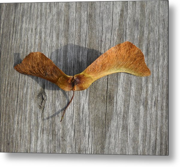 Dragon Fly Metal Print by  George Griffiths