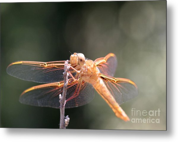 Dragon Fly Metal Print by Laura Paine