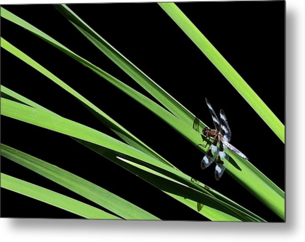 Dragon Resting On Blades Metal Print