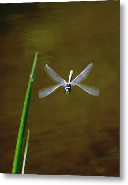 Metal Print featuring the photograph Dragonflight by Ben Upham III