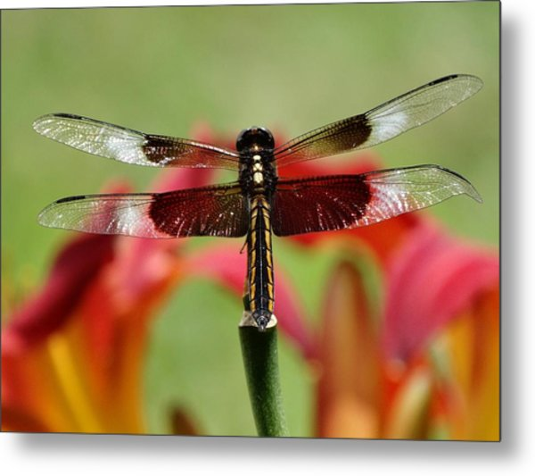 Dragonfly Beauty Metal Print