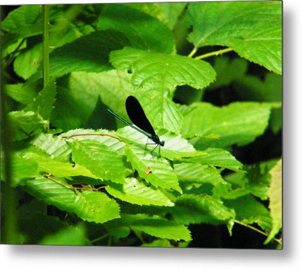 Dragonfly Metal Print by Brittany Gandee