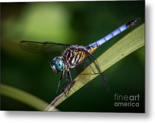 Dragonfly In The Wind Metal Print